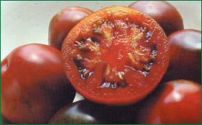 tomate_3